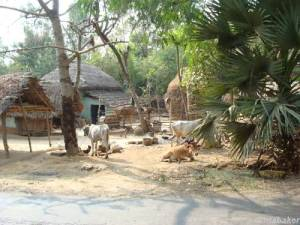 A village in West Bengal